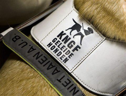 blindegeleidenhond, KNGF