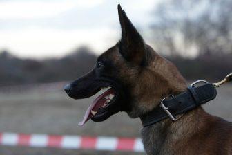 Butcher, politiehond