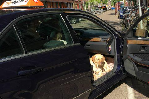 Taxi geleidehond 2